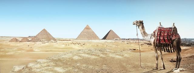 כותנה מצרית – הכותנה שנמצאת כאן כדי להישאר